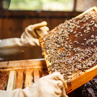 A Chatillon si festeggia anche quest'anno il miele, eccellenza gastronomica e naturalistica valdostana